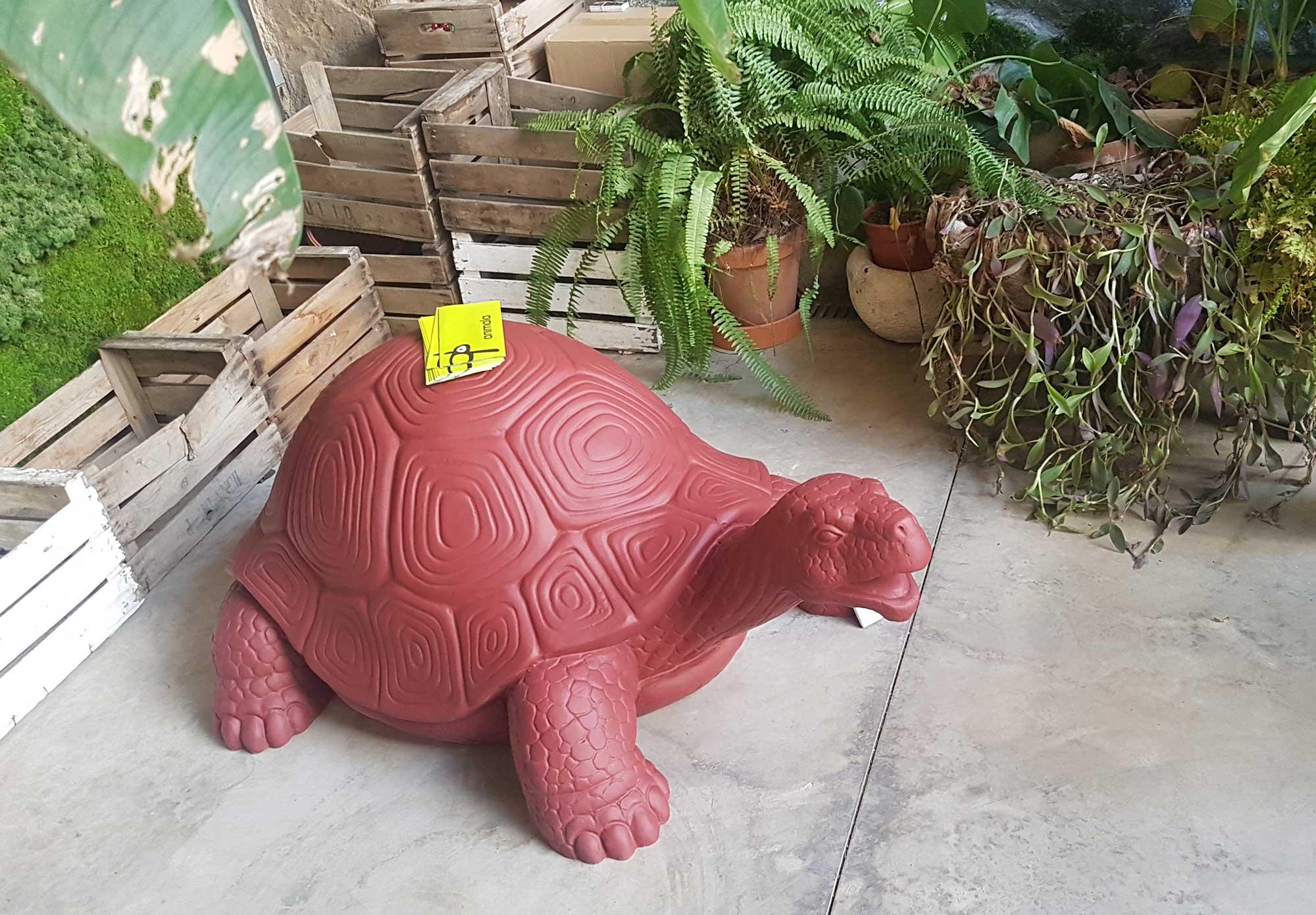 tortuga de tierra, elemento decoración Animala